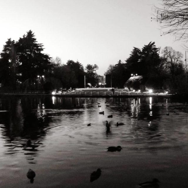 Laghetto papere e luci  Pond ducks and lights